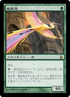 Birds of Paradise / 極楽鳥